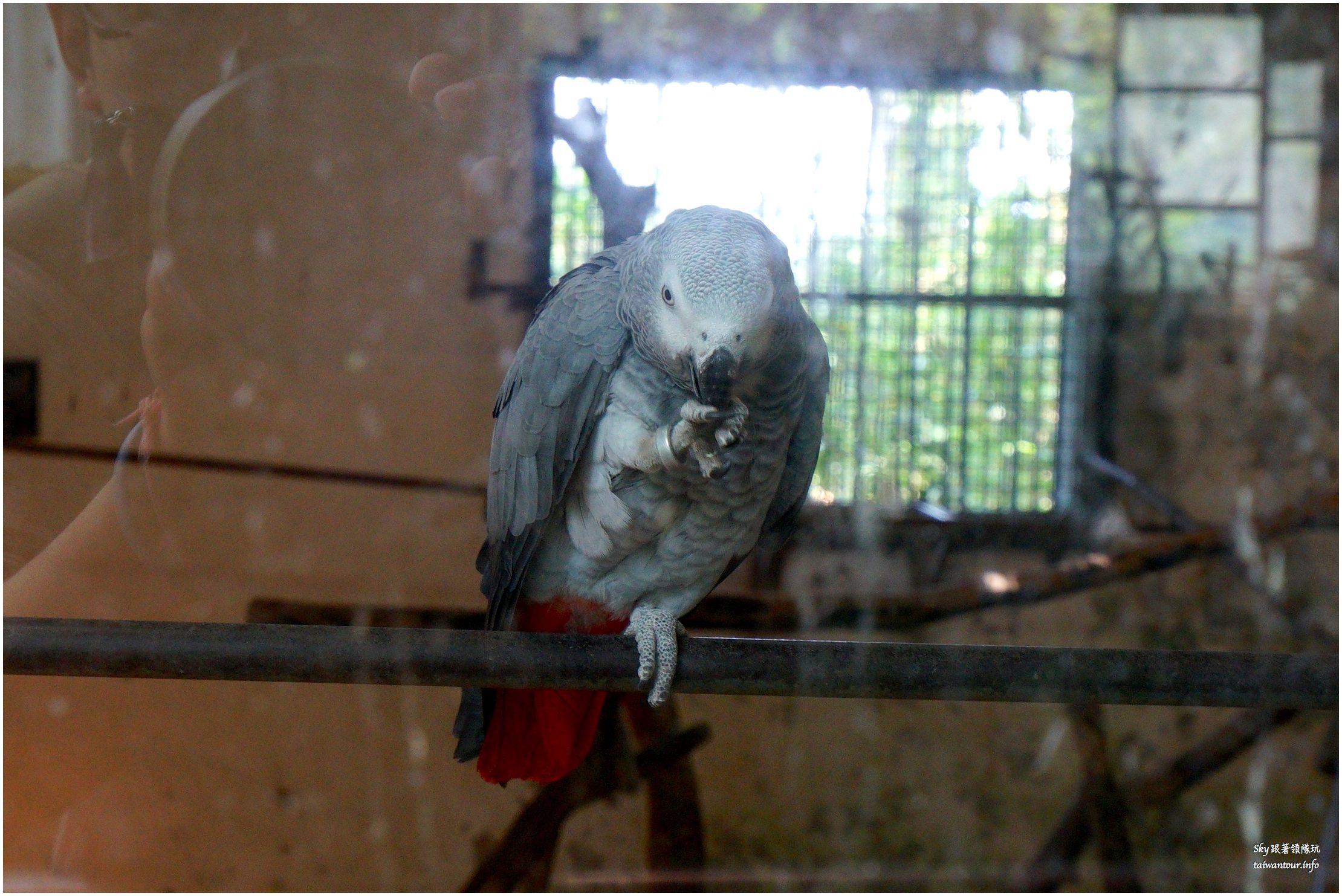 南投景點推薦鳳凰谷鳥園溜滑梯瀑布國立自然科學博物館DSC00292_结果