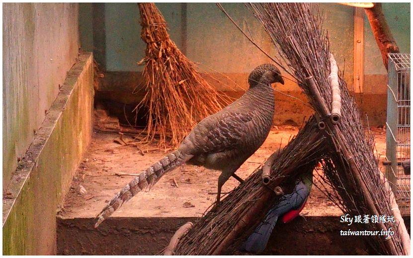 南投景點推薦鳳凰谷鳥園溜滑梯瀑布國立自然科學博物館DSC00378_结果