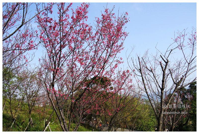 台北景點推薦大同山櫻花林03810