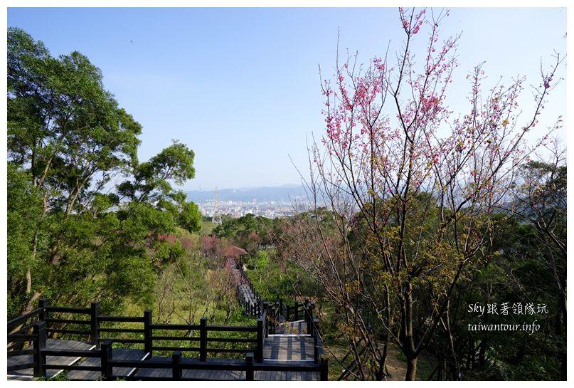 台北景點推薦大同山櫻花林03842