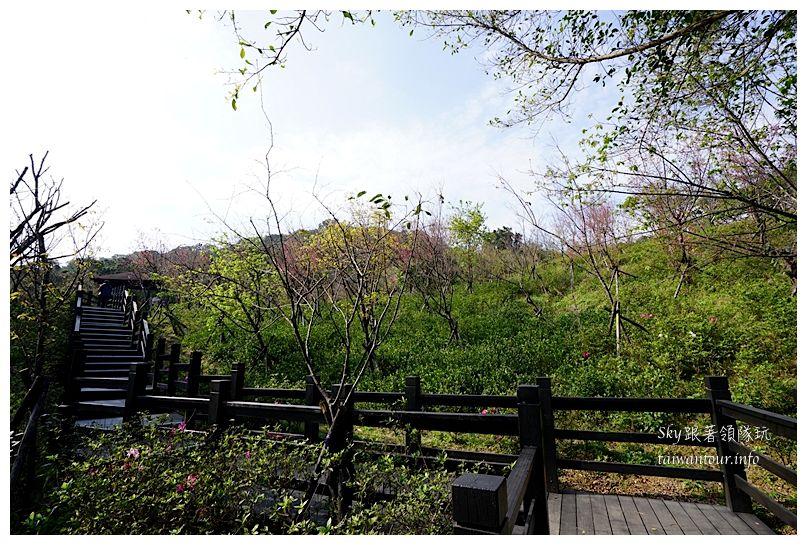 台北景點推薦大同山櫻花林03856