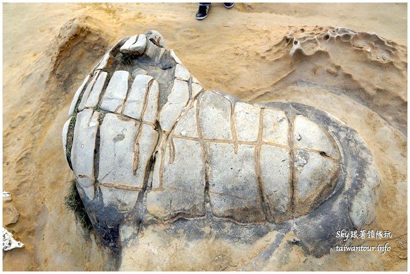 台北景點推薦野柳海洋公園DSC03589