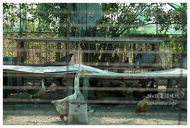 彰化一日遊劍門果園膨鼠愛葡萄雅育農場葡萄園00711