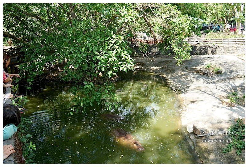 泰國親子旅遊綠山動物園kheow kheow00105
