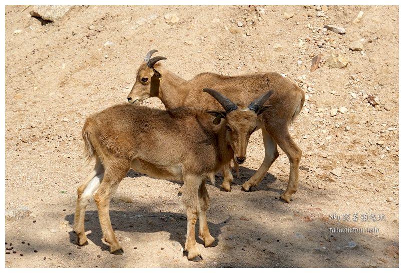 泰國親子旅遊綠山動物園kheow kheow00154