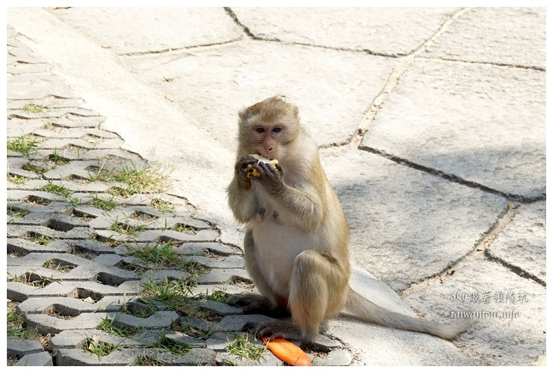 泰國親子旅遊綠山動物園kheow kheow00176