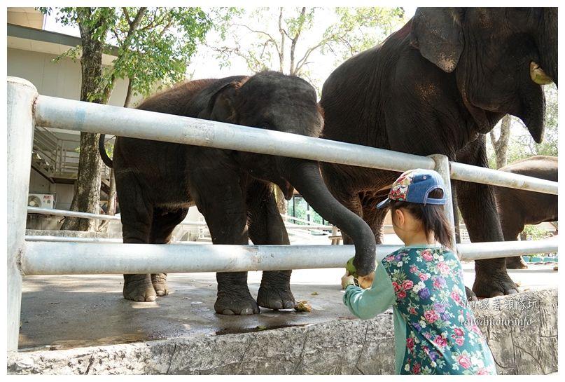泰國親子旅遊綠山動物園kheow kheow00204