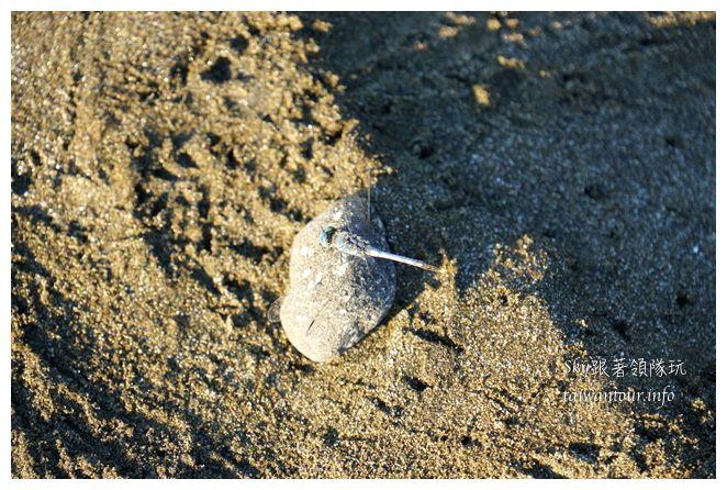 都歷木頭魚沙灘04636