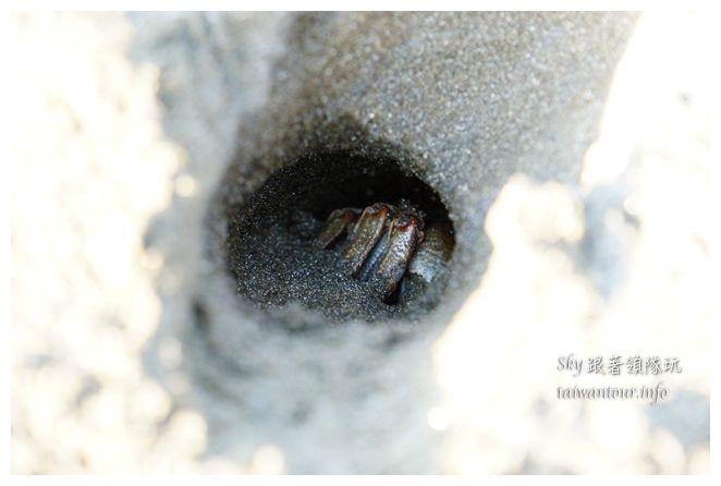 都歷木頭魚沙灘04638