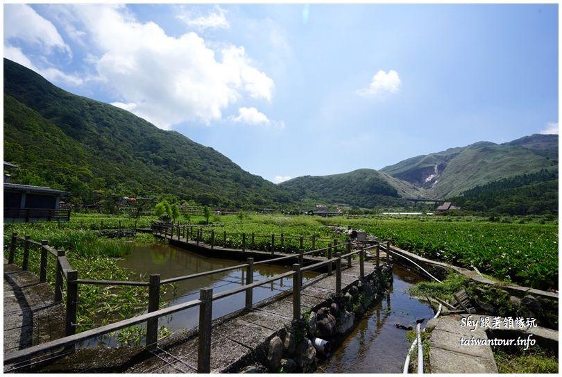 陽明山竹子湖繡球花大賞園DSC02697