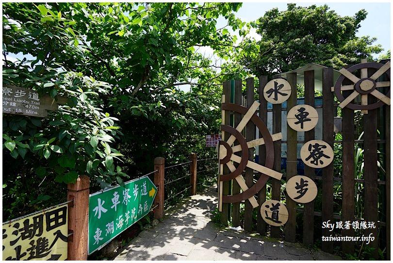 陽明山竹子湖繡球花DSC02858
