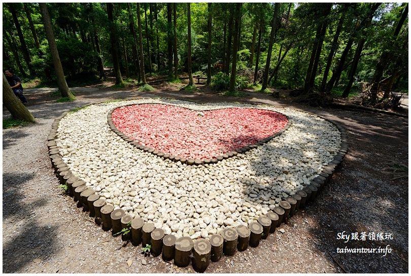 陽明山竹子湖繡球花DSC02984