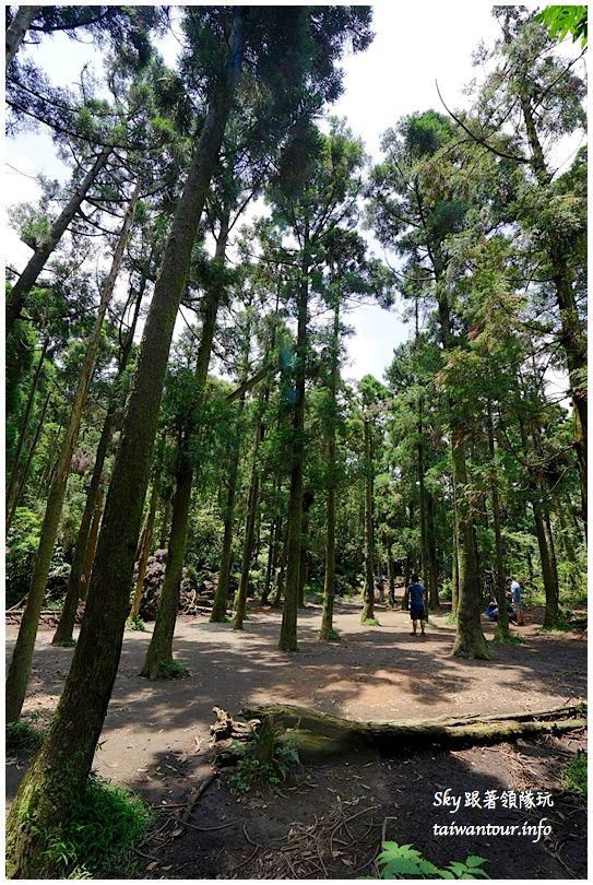 陽明山竹子湖繡球花DSC02988