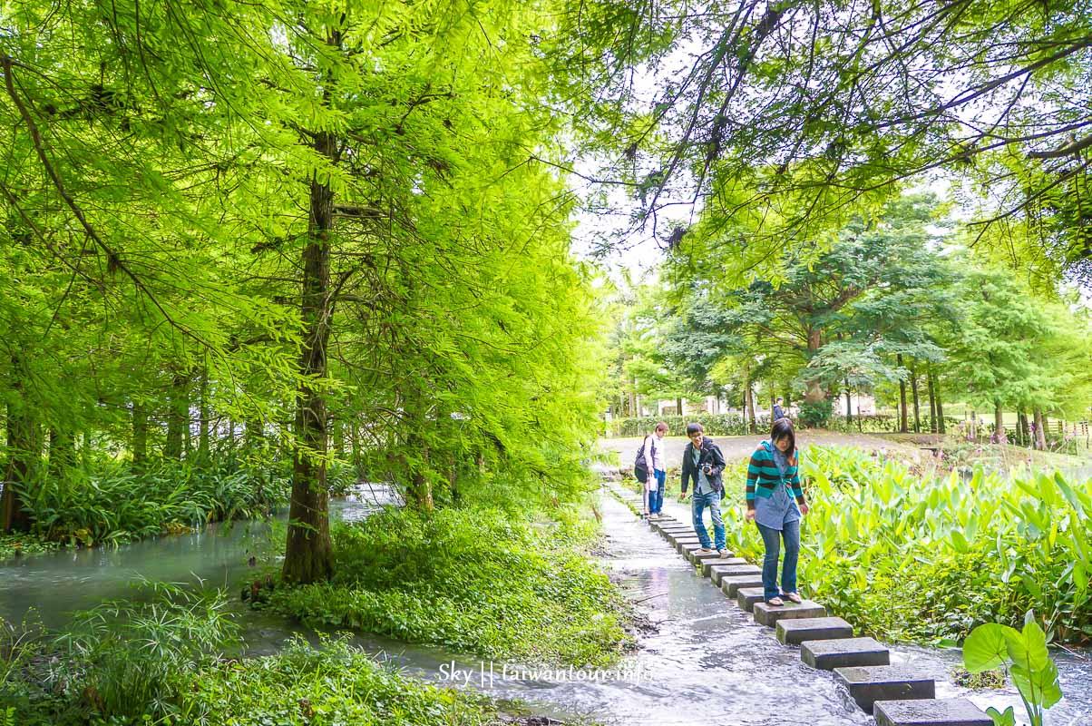 花蓮壽豐鄉【雲山水濕地生態園區】落羽松秘境景點推薦