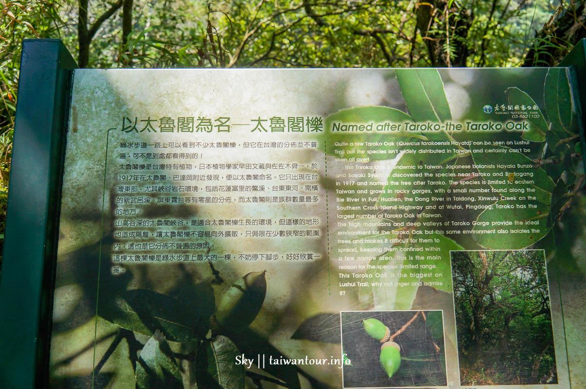 花蓮景點推薦【綠水步道】百年步道太魯閣國家公園