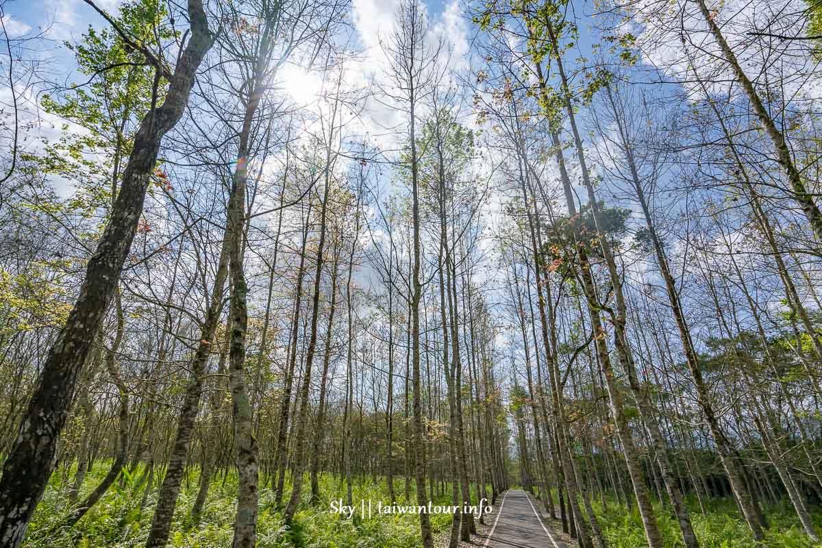 花蓮景點推薦【大農大富平地森林】光復鄉伯朗大道半日遊