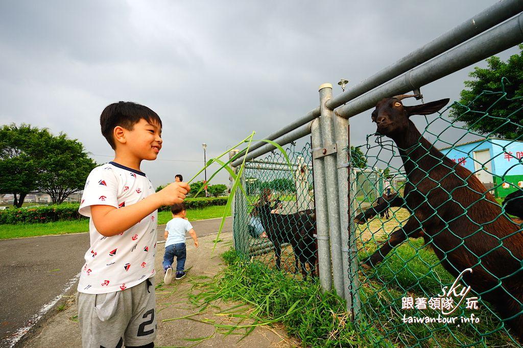 台北景點推薦【疏洪荷花公園】三重親子旅遊免費餵羊咩咩