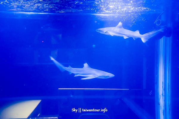 台北美食推薦-信義區超HIGH【Shark Show夜餐館】