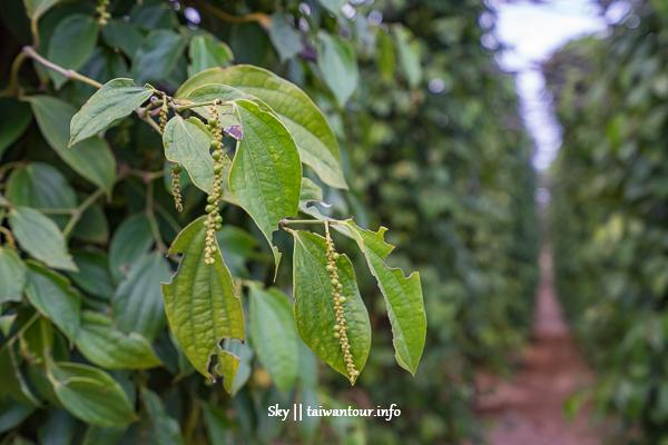 柬埔寨景點推薦-貢布【La Plantation Kampot 胡椒植物園】