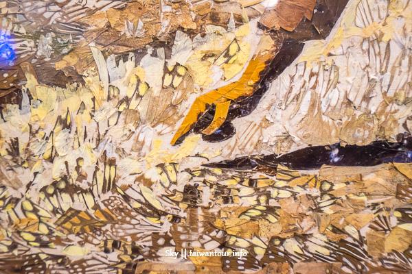 宜蘭親子景點-蘇澳【綺麗蝴蝶藝術館.珊瑚博物館】