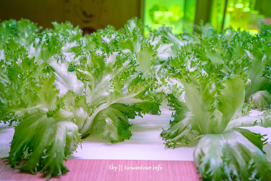 台北NICE GREEn美蔬菜DIY【小小科技農夫親子體驗營】夏令營