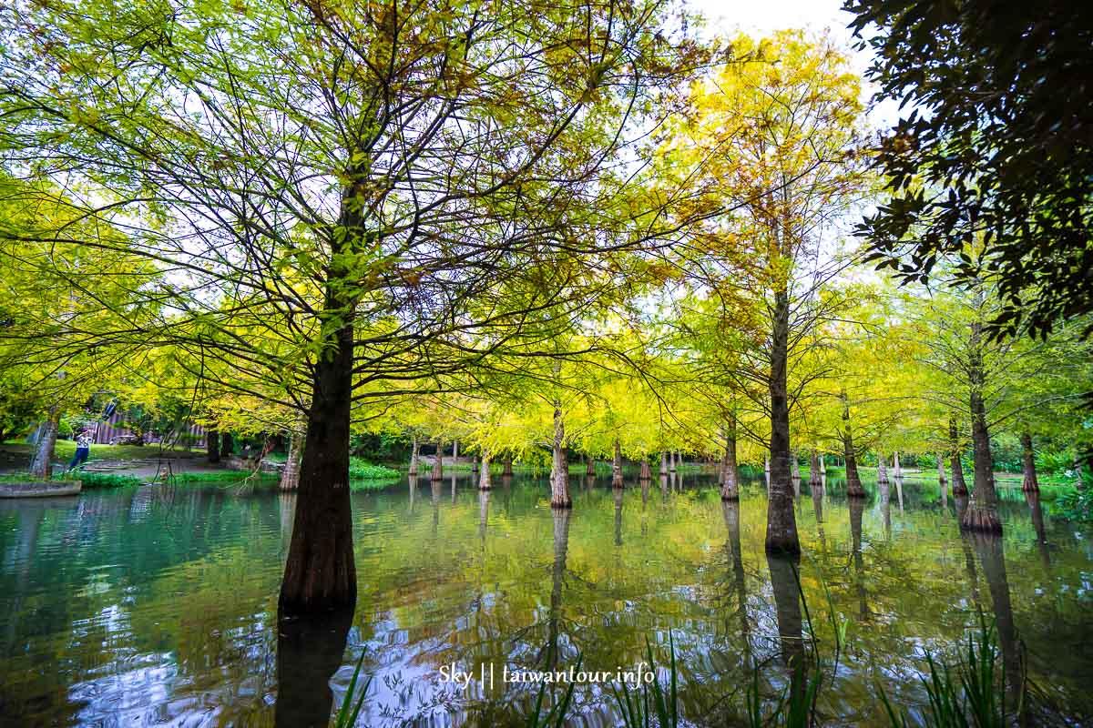 【鈺展苗圃】2021花蓮景點落羽松森林秘境.季節.交通.門票