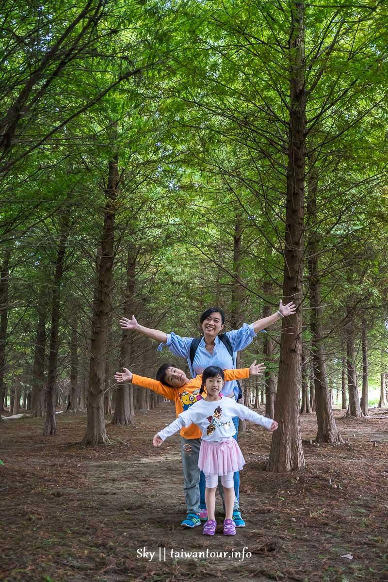 桃園秘境【八德落羽松森林】網美打卡落羽松季節.停車交通資訊