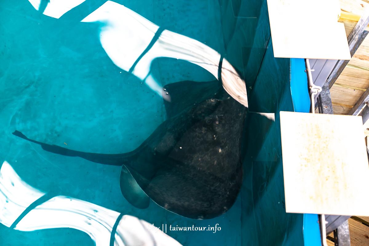 2020宜蘭礁溪親子景點【金車生技水產養殖研發中心】水族館.交通.鯊魚.餐廳