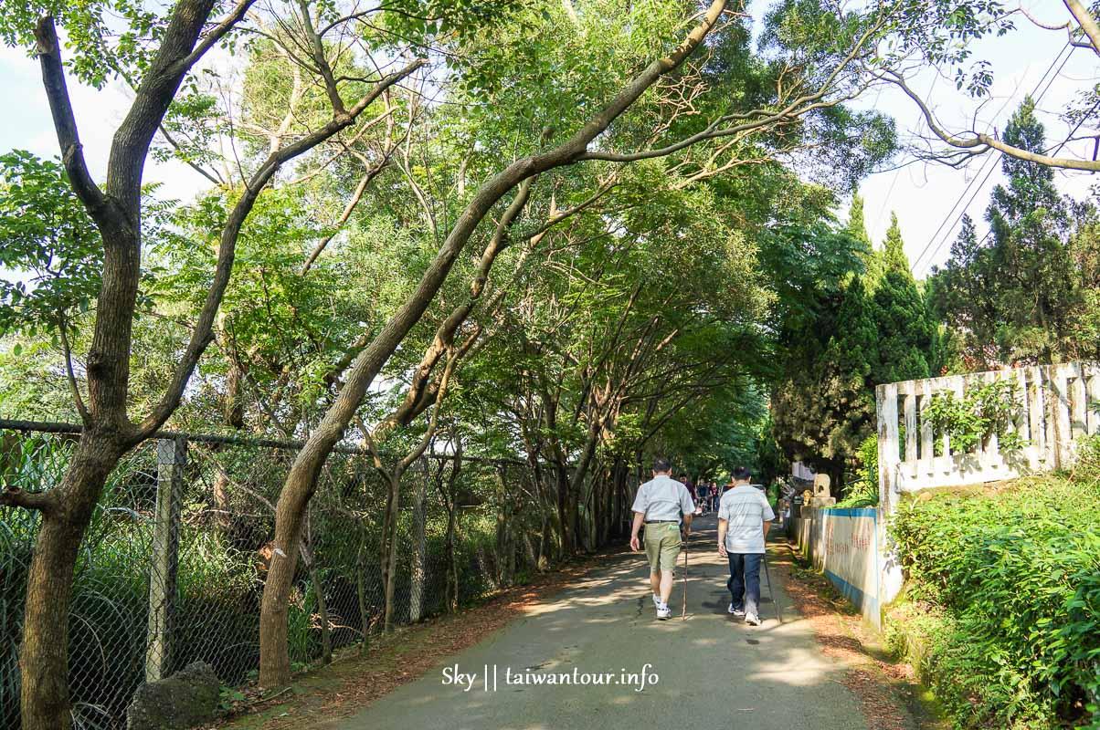 【湖口老街.仁和步道】新竹油桐花秘境親子景點推薦