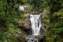 閱讀文章:受保護的內容: 森林巴士【內洞國家森林芬多精健行一日】幸福森在其中