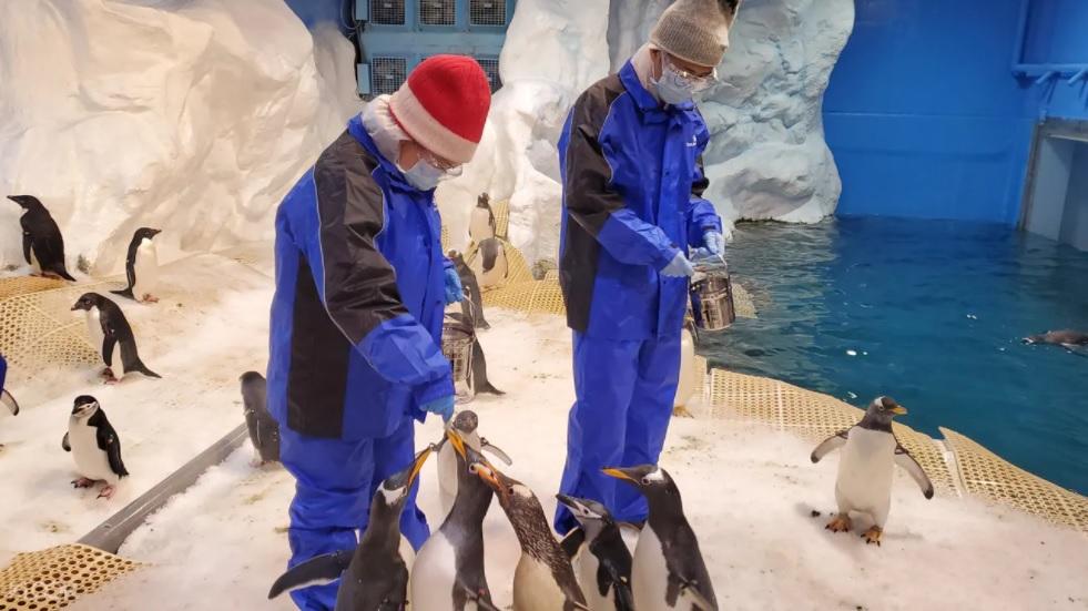 【屏東海生館企鵝飼育照護體驗】獨家票劵.我與企鵝的0.1毫米